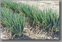 命の基盤である農林水産業の発展